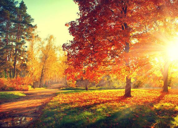 123RF.com nuotr./Miškais ateina ruduo