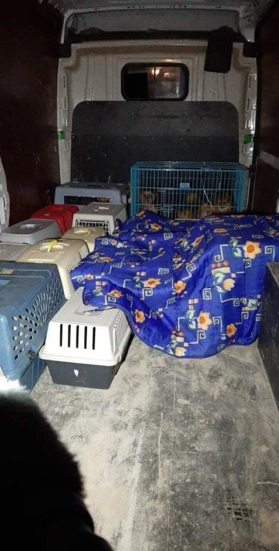 15min skaitytojo nuotr./Kauno rajone iš galimai nelegalios daugyklos paimti 82 šunys