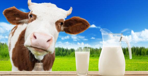Išaugo pieno supirkimo kaina