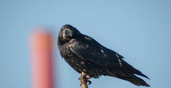 Miesto paukščiai džiaugiasi pavasario saule