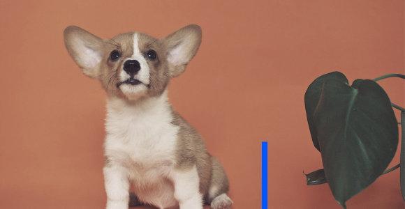 Iš proto vedantis šuns lojimas: ką daryti, jeigu nesinori atsidurti policijoje ar teisme?