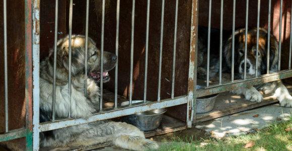 Dėl gyvūnų cirkuose beveik sutaria, tačiau siūlo išimtį dalyvaujantiems parodose
