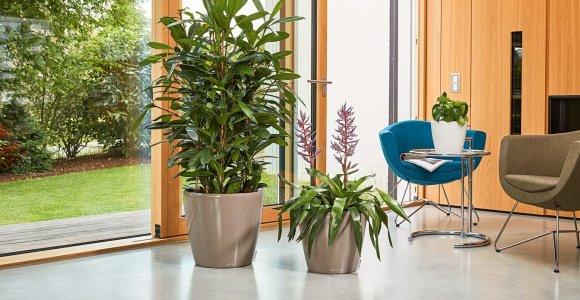 Vazonai su laistymo sistema – naujos kartos augalininkystė
