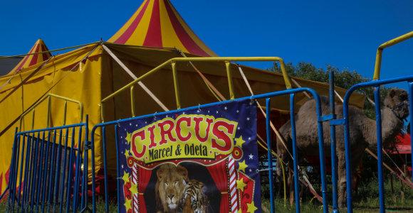 Kėdainių rajono politikai uždraudė cirko pasirodymus su laukiniais gyvūnais