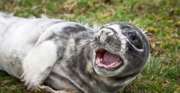 """Smiltynėje iškils """"sanatorija"""" nukentėjusiems Baltijos jūros gyvūnams"""