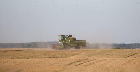 Ūkininkai per javapjūtę užkliudo arba nugriauna elektros stulpus