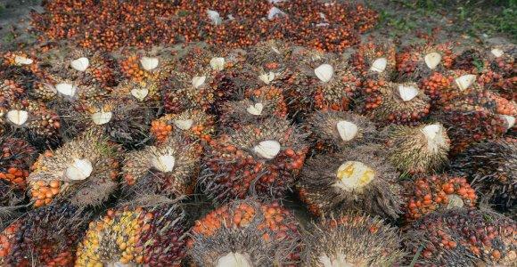 Kas yra palmių aliejus ir kodėl jo yra visur?