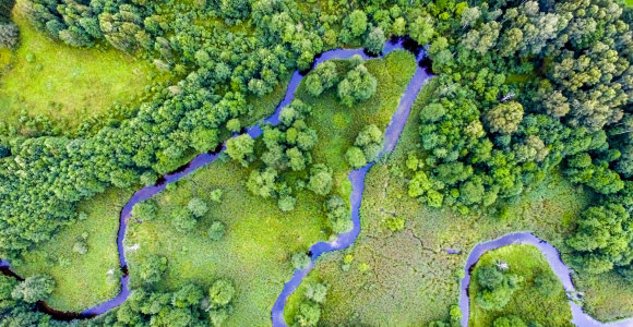 Nauja miško kirtimo tvarka – didesnis dėmesys draustiniams