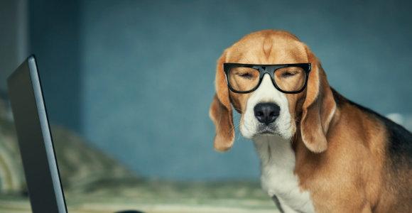 Šunys gali užuosti vėžį, parodė tyrimas