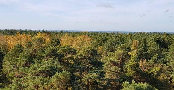 STT: Miškų ir Saugomų teritorijų įstatymų pakeitimai sudaro prielaidas piktnaudžiauti