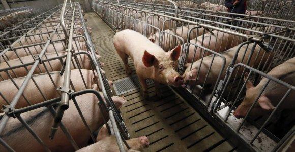 Kinijoje siaučiant kiaulių marui, Estijoje pranašaujamas kiaulienos brangimas