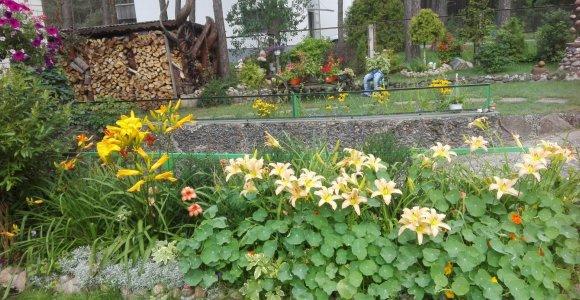 """Konkurso """"Mano kiemas"""" dalyvė Janina: žmonės klausia, ar tai ne botanikos sodas"""