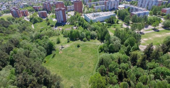 Vilniečius papiktino planai Baltupiuose kirsti medžius