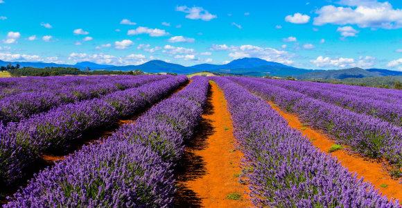 Tolimoji Tasmanija – užburiančios gamtos rojus (II dalis)