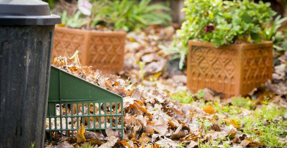 Kraštovaizdžio specialistė pataria: 6 svarbiausi sodo darbai rudenį