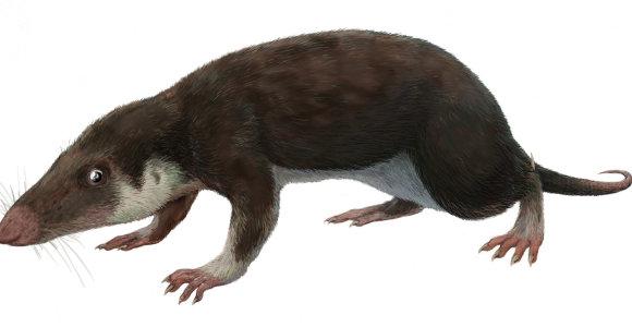 Žinduoliai dešimtis milijonų metų buvo šaltakraujai