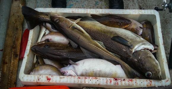 Menkių žvejybos Baltijos jūros rytinėje dalyje kvotos mažinamos 92 proc.