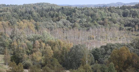 Aukščiausias Žemaitijos piliakalnis – Medvėgalis