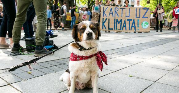 Protestuojantys aktyvistai: klimato kaita ir masiškai nykstančios rūšys yra tiesiogiai susiję