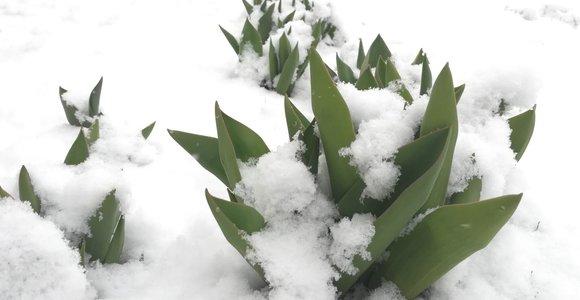 Per Lietuvą iš vakarų keliauja sniegas: paskutinis žiemos pasispardymas?