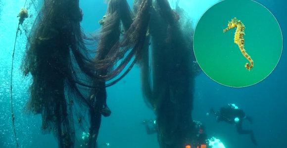 """Skaudi žmonių neatsakingumo kaina: tonos tinklų """"vaiduoklių"""" kelia grėsmę ypač retos rūšies jūrų arkliukams"""