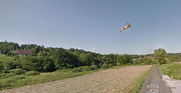 """""""Google street view"""" užfiksuotas kiškis"""