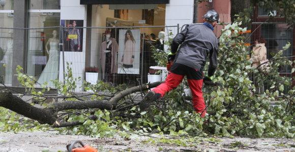 Šiaulių centre griūva sveikutėliai medžiai