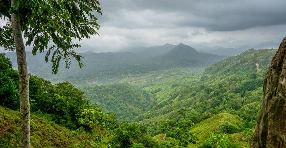 Tikrasis Indiana Džonsas: ką galbūt rado Amazonės miškuose mįslingai dingęs anglas Percy Fawcettas?