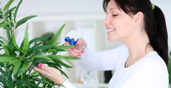 10 priežasčių namuose auginti daugiau augalų