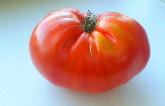 Skaitytojo Vytauto nuotr./Didelis pomidoras