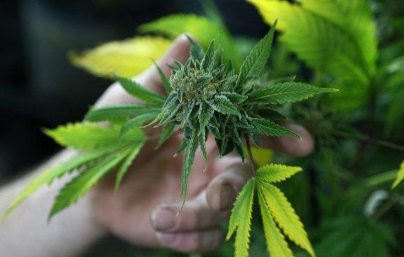 """Reuters""/""Scanpix"" nuotr./Marihuana"