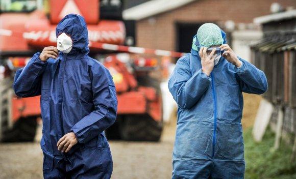 """AFP/""""Scanpix"""" nuotr./Nyderlanduose dėl paukščių gripo išpjauta 190 tūkst. ančių"""