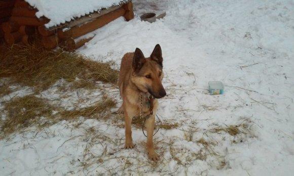 HAPPY365 nuotr./Ingos rastas šuo