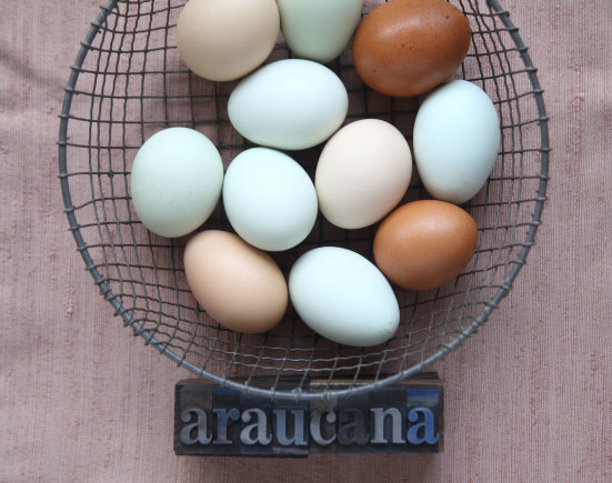 Vida Press nuotr./Kiaušiniai