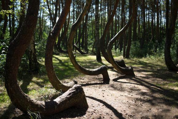 Miškas Lenkijoje