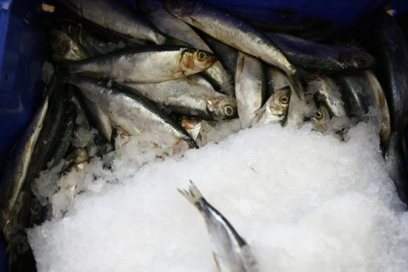 15min.lt nuotr./Iš Žuvininkystės produktų aukciono norima susigrąžinti apie 5,6 mln. Lt, skirtų iš Europos Sąjungos fondų.