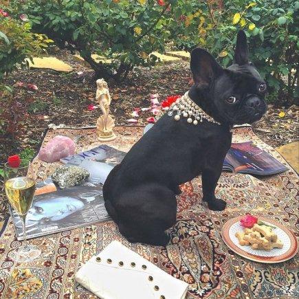 """""""Instagram"""" nuotr./Lady Gagos augintinė Asia"""