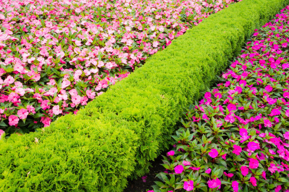 """""""Fotolia"""" nuotr./Gėlės ir apkarpytos tujos"""