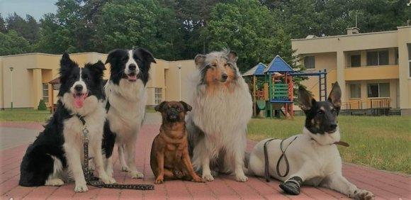LSMU archyvo nuotr./Kaniterapijai šunys specialiai parengiami ir testuojami.