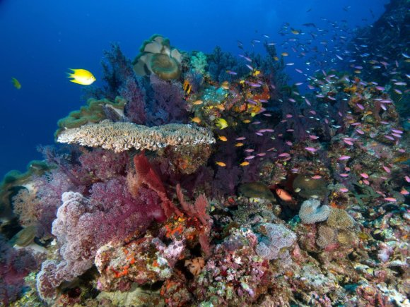 Wira Wijoga nuotr./Minkštieji ir kietieji koralai Namenos rezervate