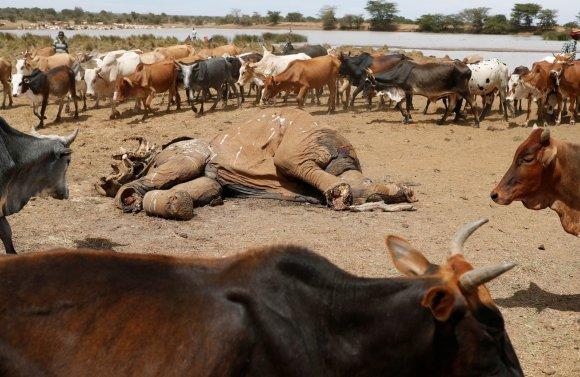 """""""Reuters""""/""""Scanpix"""" nuotr./Dėl sausros Kenijoje gyvulius auginančio gentys ėmė aršiai kovoti dėl mažėjančių resursų"""
