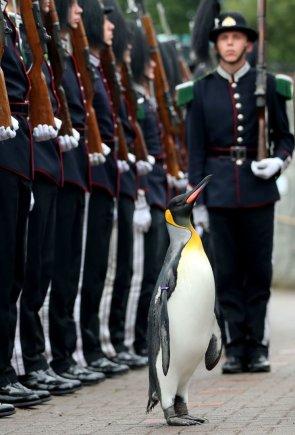"""""""Scanpix""""/AP nuotr./Edinburgo karališkajam pingvinui Olavui suteiktas Norvegijos brigados vado karinis laipsnis"""