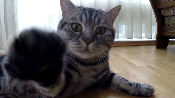 15min.lt stopkadras/Vienas iš Eglės katinų