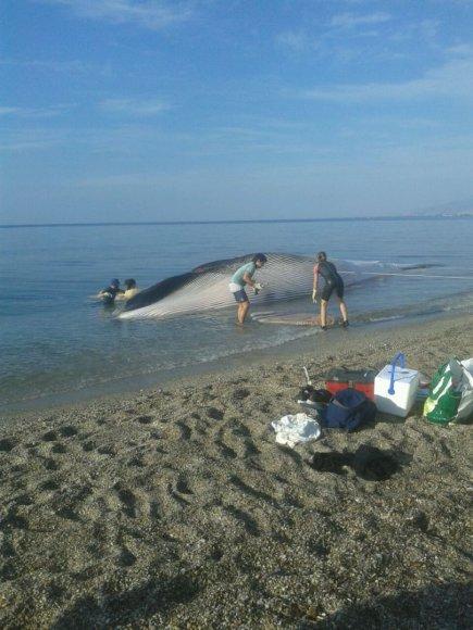 Banginis, išmestas į krantą