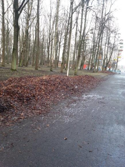 Pernykščiai lapai Šiauliuose