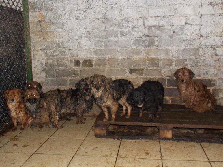 Žmonės gelbėjo gyvūnus iš Gruzdžių karantinavimo patalpų