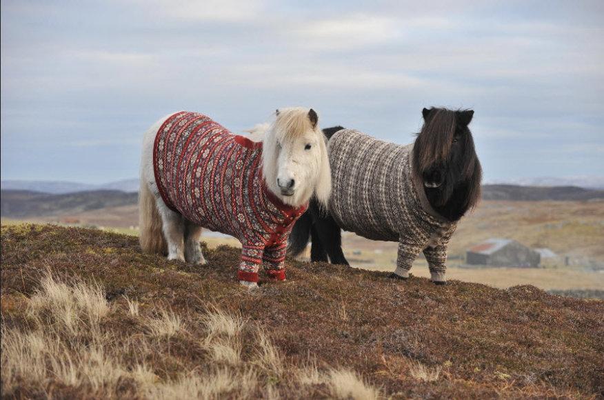 Atsinaujinusi Škotijos turistinė reklama - pasipuošę poniai