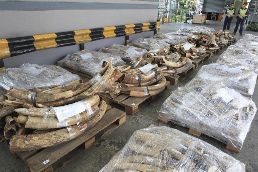 Konteineriuose rasta per 1 200 dramblių ilčių,