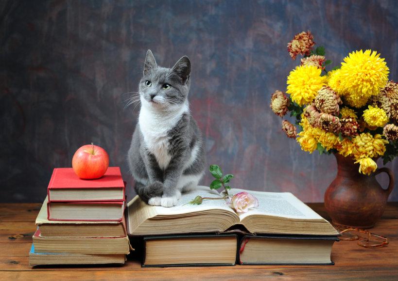 Išmintingas katinas.