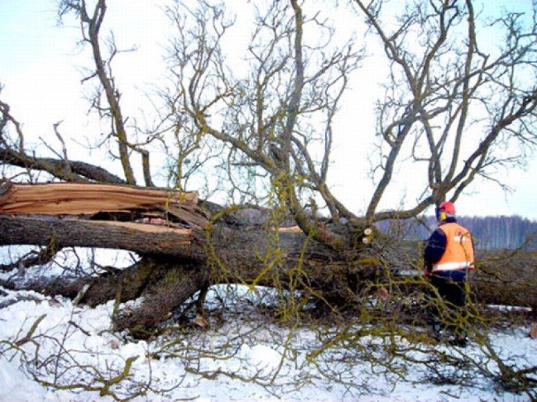 Rajono gyventojai aimanuoja dėl nenuvalytų kelių, tuo tarpu kelininkai užsiima visai kuo kitu – medžių pjovimu.